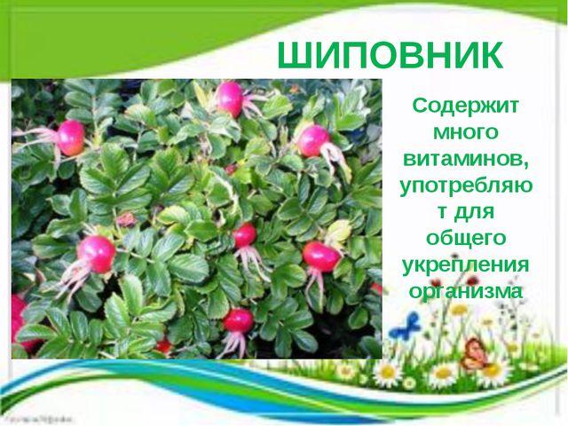 ШИПОВНИК Содержит много витаминов, употребляют для общего укрепления организма