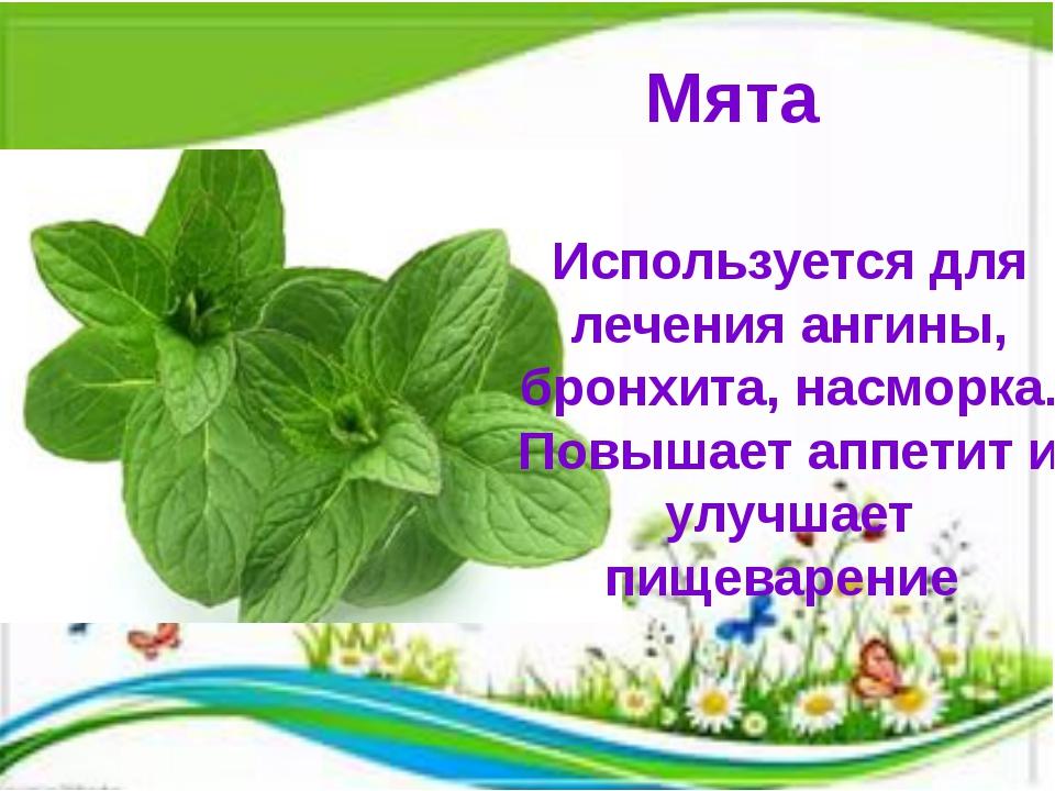 Мята Используется для лечения ангины, бронхита, насморка. Повышает аппетит и...