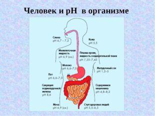 Человек и pH в организме