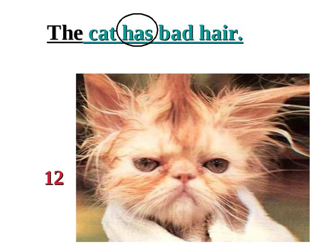 The cat has bad hair. 12