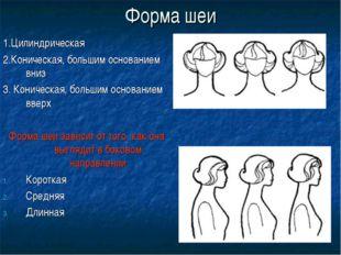 Форма шеи 1.Цилиндрическая 2.Коническая, большим основанием вниз 3. Коническа