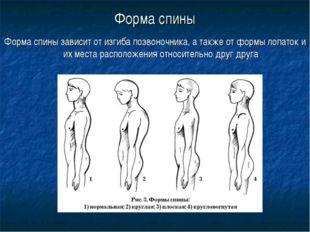 Форма спины Форма спины зависит от изгиба позвоночника, а также от формы лопа