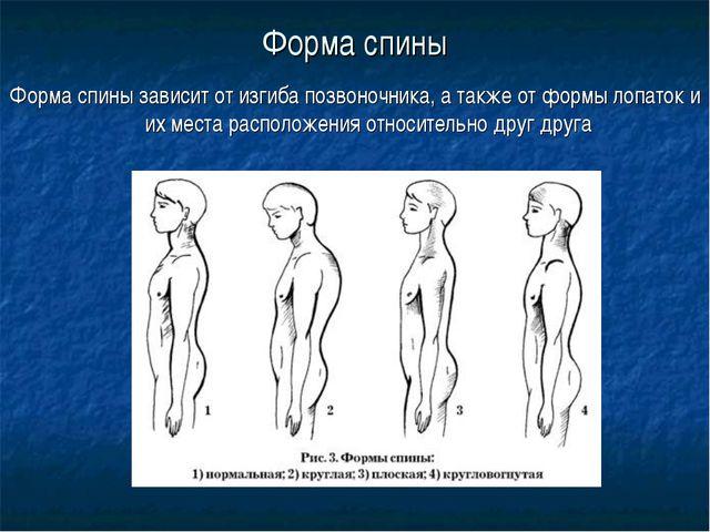 Форма спины Форма спины зависит от изгиба позвоночника, а также от формы лопа...