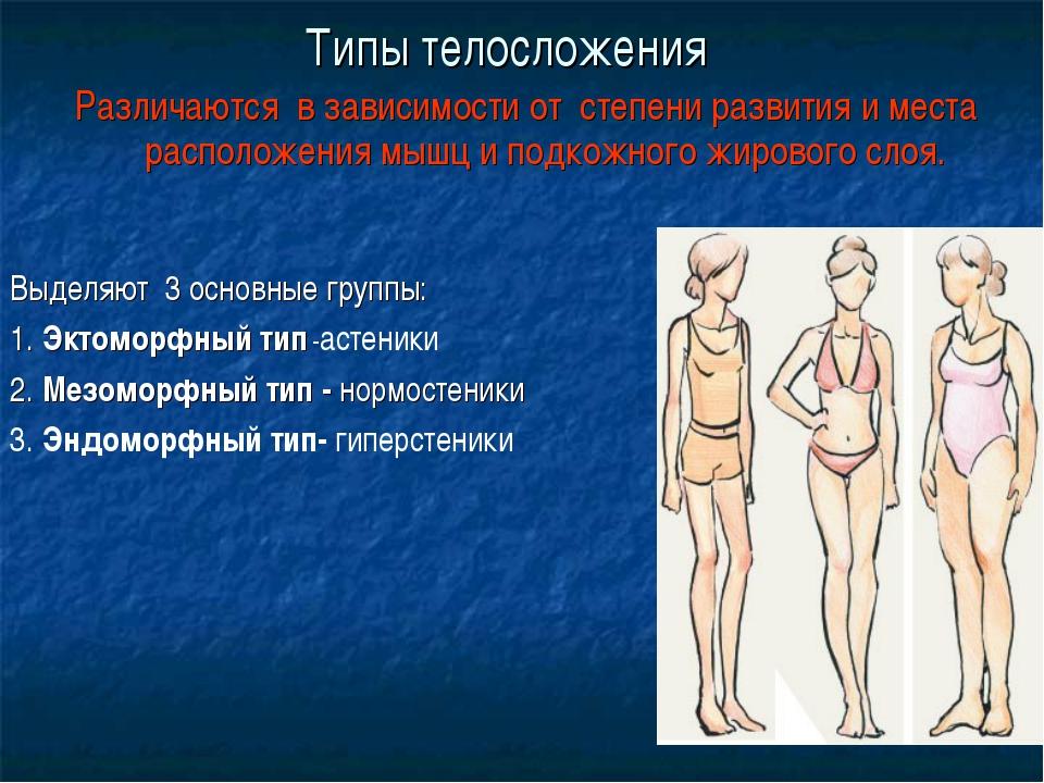 Типы телосложения Различаются в зависимости от степени развития и места распо...