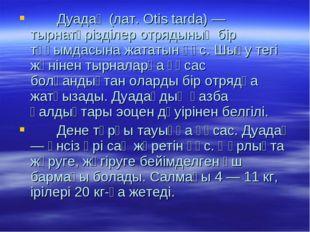 Дуадақ (лат. Otis tarda) — тырнатәрізділер отрядының бір тұқымдасына жататын
