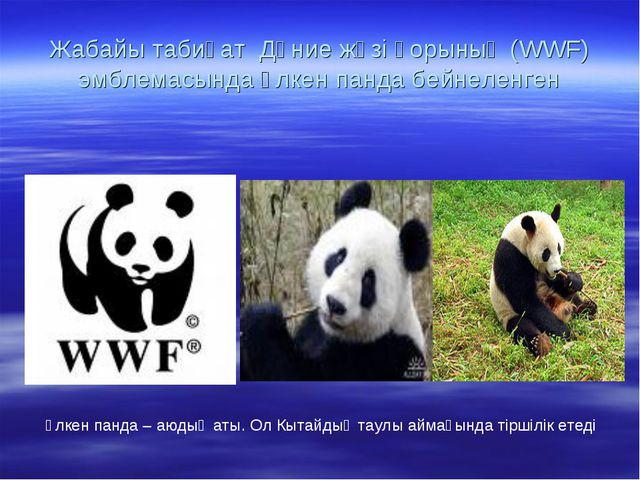 Жабайы табиғат Дүние жүзі қорының (WWF) эмблемасында үлкен панда бейнеленген...