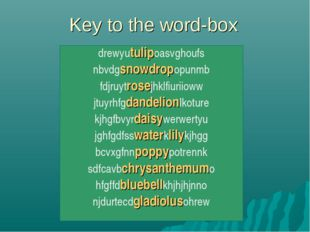 Key to the word-box drewyutulipoasvghoufs nbvdgsnowdropopunmb fdjruytrosejhkl