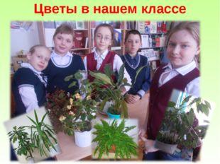 Цветы в нашем классе