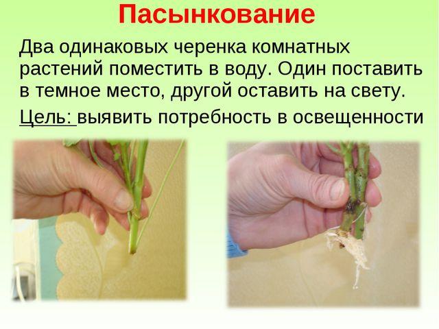 Два одинаковых черенка комнатных растений поместить в воду. Один поставить в...