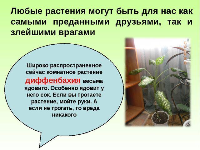 Любые растения могут быть для нас как самыми преданными друзьями, так и злейш...