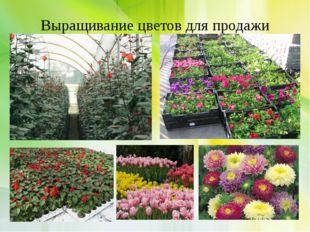 Выращивание цветов для продажи