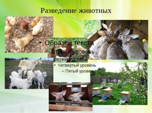 Разведение животных