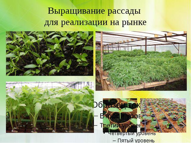 Выращивание рассады для реализации на рынке
