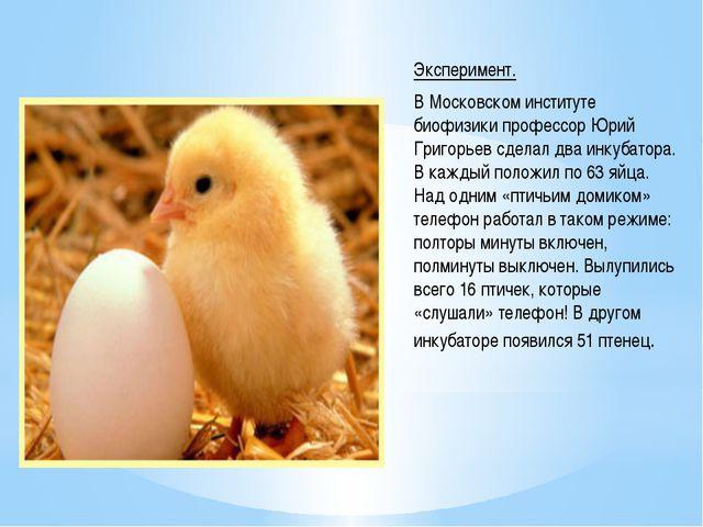 Эксперимент. В Московском институте биофизики профессор Юрий Григорьев сделал...