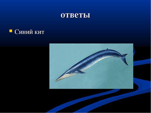 ответы Синий кит