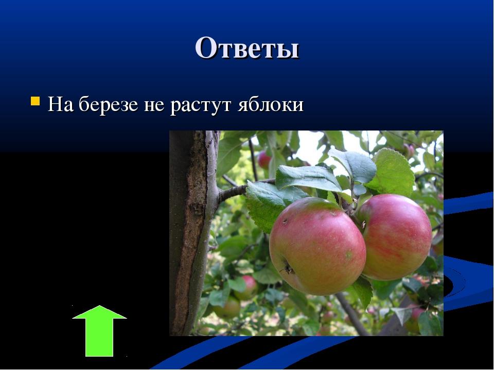 Ответы На березе не растут яблоки