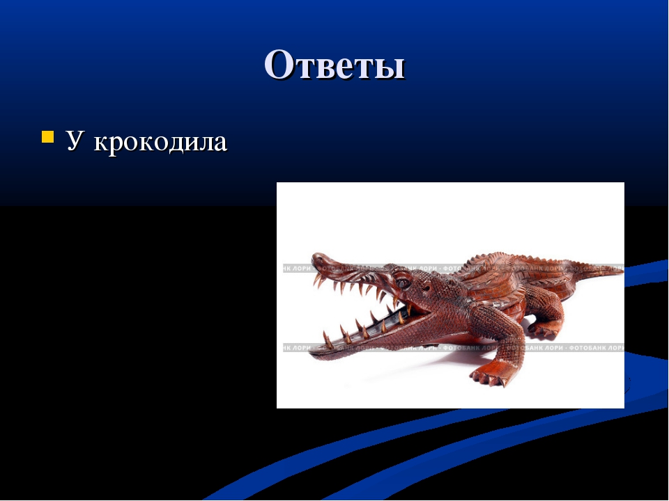Ответы У крокодила