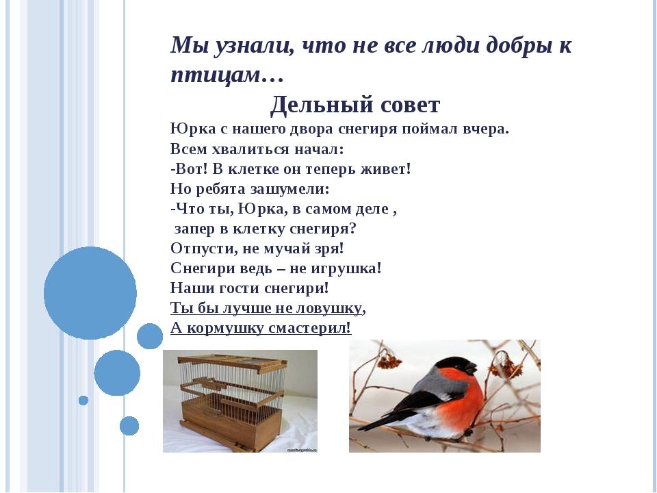 Мы узнали, что не все люди добры к птицам… Дельный совет Юрка с нашего двора...