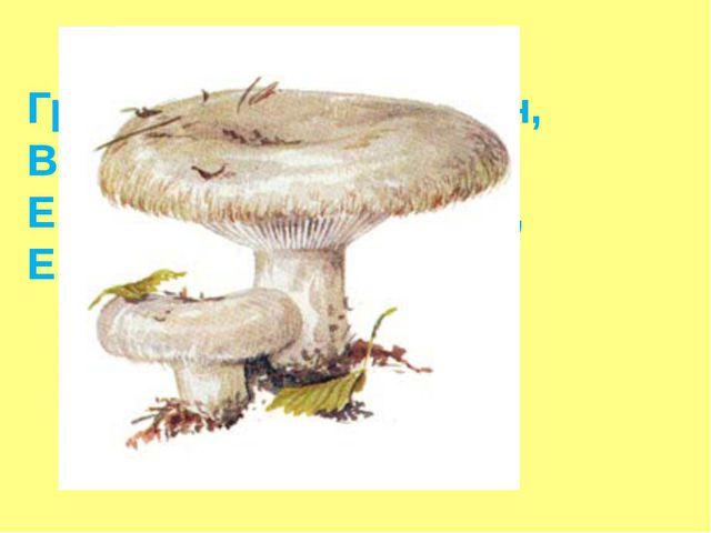 Грозный стройный пан, Владыка всем грибам, Ему не знакома грусть, Его называю...