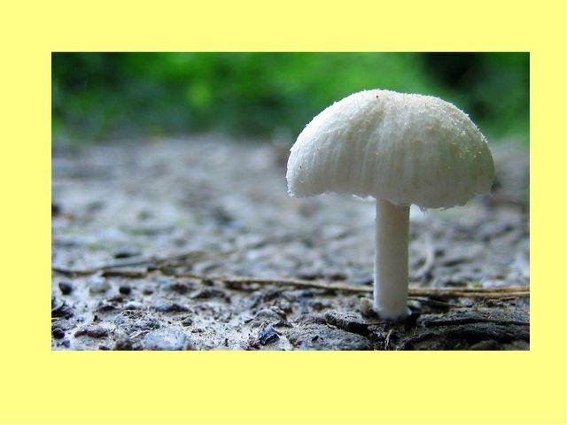 В белой шляпке Красивая дама. Смотрит свысока – Ручки в бока, Богата и важна,...
