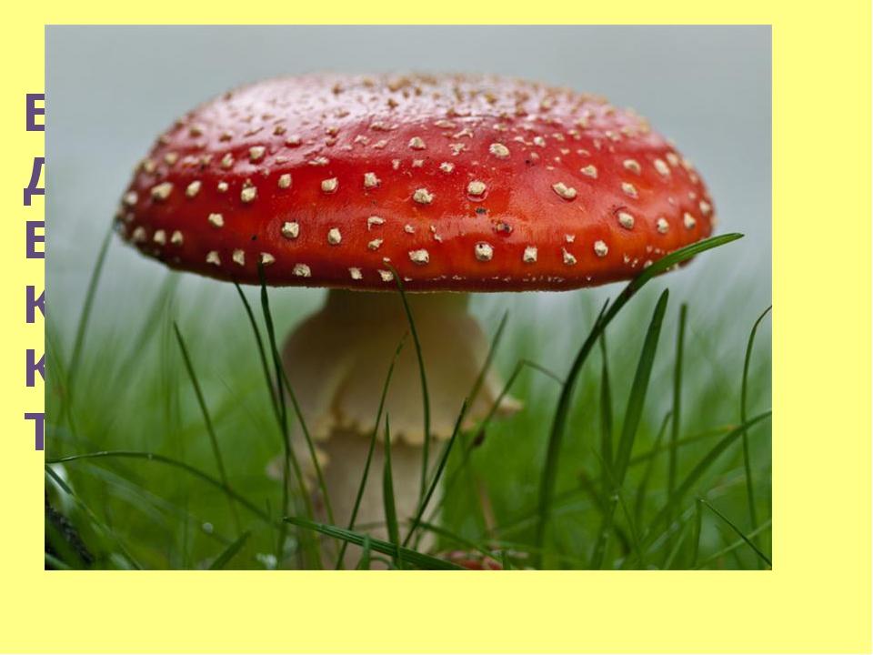 В белом парике Да в белом пиджаке, В шляпке ярко-красной, Красивой и опасной....