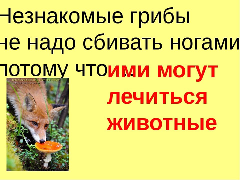 Незнакомые грибы не надо сбивать ногами, потому что … ими могут лечиться живо...