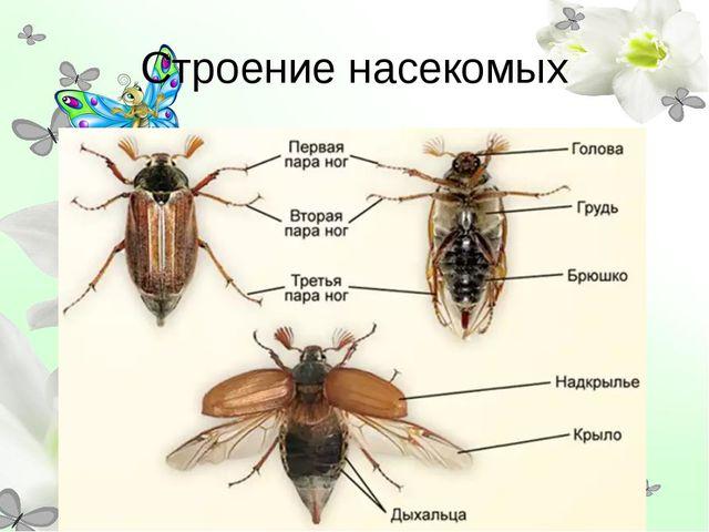Строение насекомых