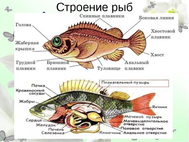 Строение рыб