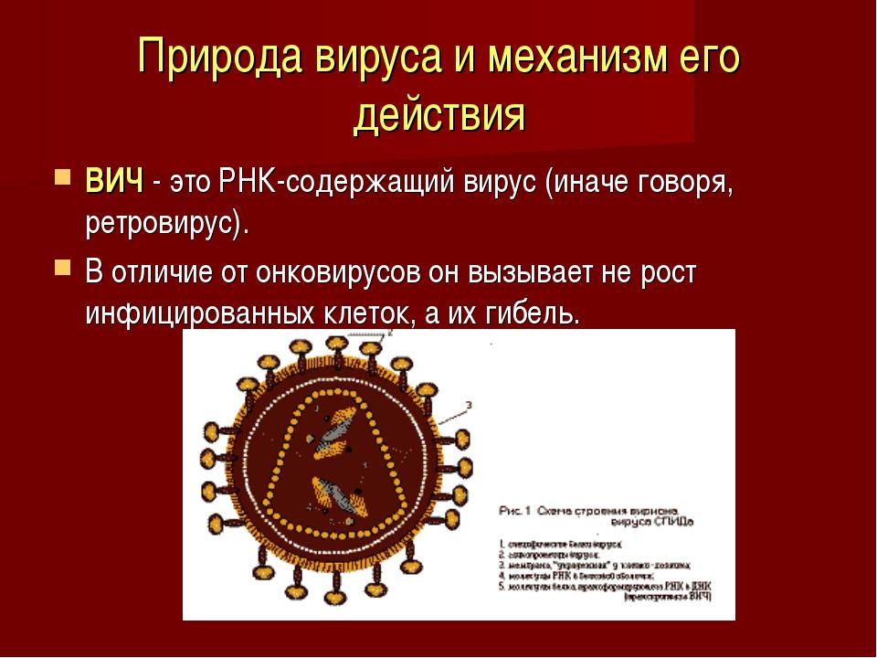 Природа вируса и механизм его действия ВИЧ - это РНК-содержащий вирус (иначе...