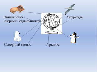 Южный полюс Антарктида Северный Ледовитый океан Северный полюс Арктика