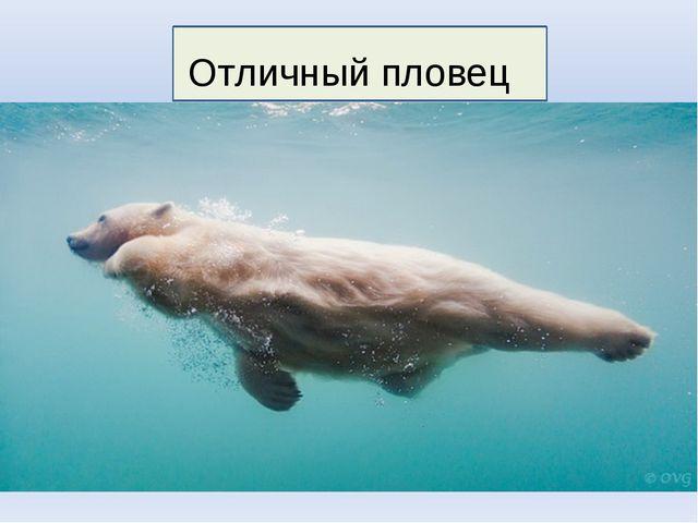 Отличный пловец