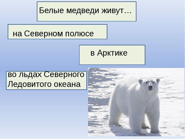 Белые медведи живут… на Северном полюсе во льдах Северного Ледовитого океана...