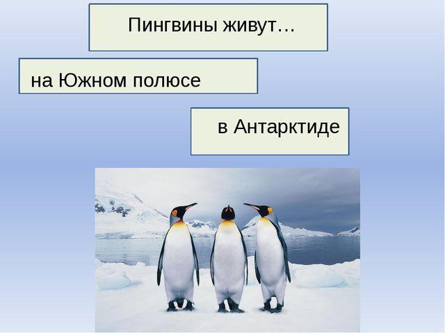 Пингвины живут… на Южном полюсе в Антарктиде