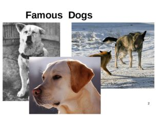 Famous Dogs 	 *