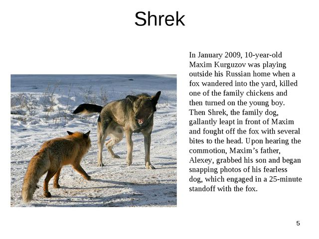 Shrek * In January 2009, 10-year-old Maxim Kurguzov was playing outside his R...
