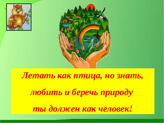 Летать как птица, но знать, любить и беречь природу ты должен как человек!