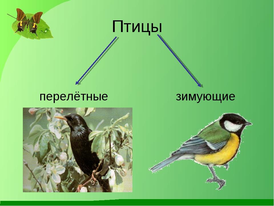 Птицы перелётные зимующие