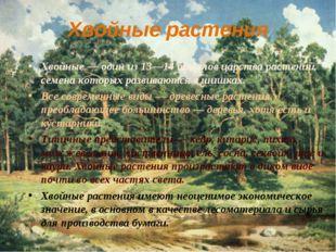 Хвойные растения Хвойные — один из 13—14 отделов царства растений, семена кот