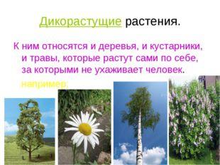 Дикорастущие растения. К ним относятся и деревья, и кустарники, и травы, кото