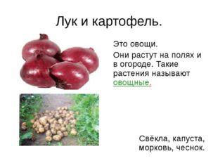 Лук и картофель. Это овощи. Они растут на полях и в огороде. Такие растения н