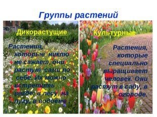 Группы растений Дикорастущие Растения, которые никто не сажает, они растут са