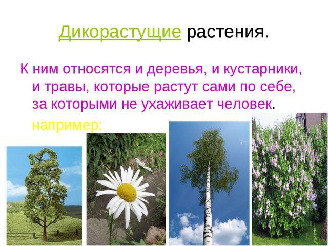 Дикорастущие растения. К ним относятся и деревья, и кустарники, и травы, кото...