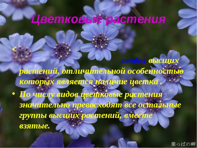 Цветковые растения Цветко́вые расте́ния, илиПокры́тосеменны́еотделвысших...
