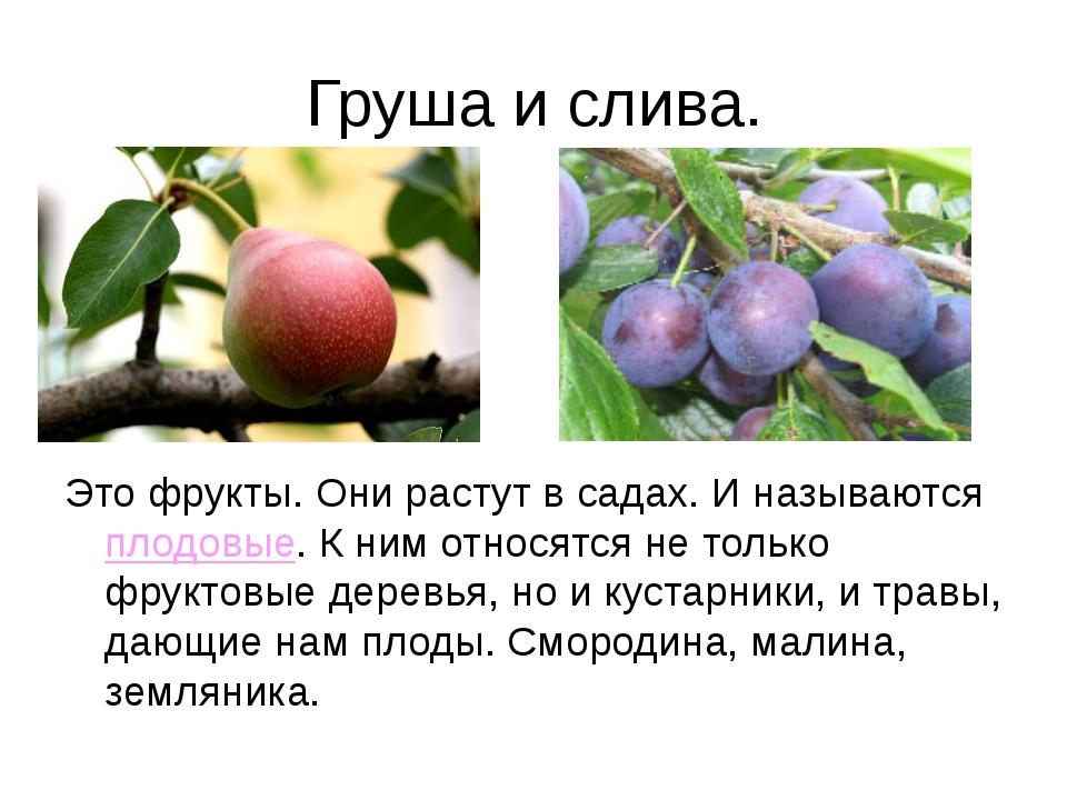 Груша и слива. Это фрукты. Они растут в садах. И называются плодовые. К ним о...