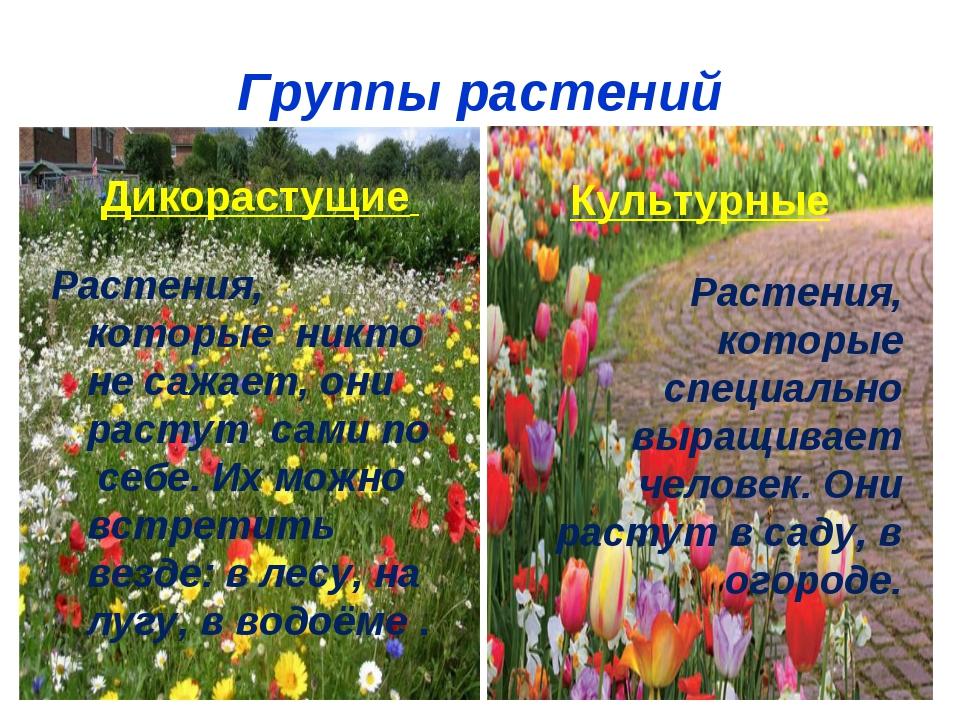 Группы растений Дикорастущие Растения, которые никто не сажает, они растут са...