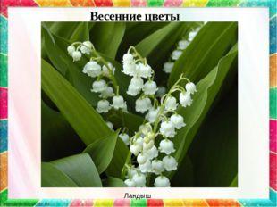 Весенние цветы Ландыш
