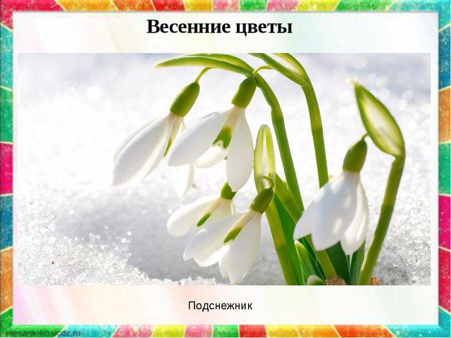 Весенние цветы Подснежник