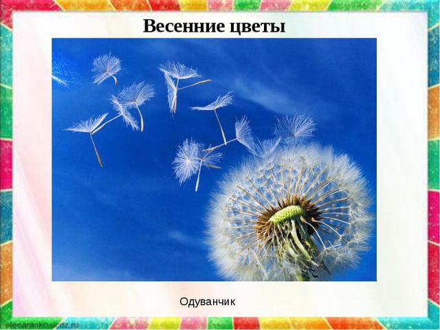 Весенние цветы Одуванчик
