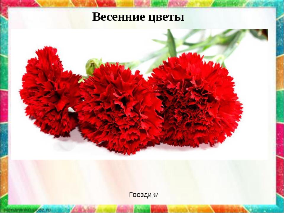 Весенние цветы Гвоздики