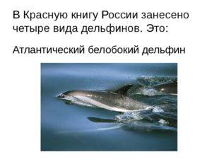 В Красную книгу России занесено четыре вида дельфинов. Это: Атлантический бел